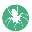 build a website professional web developer logo spider